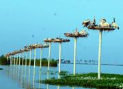 Kolleru Bird Sanctuary